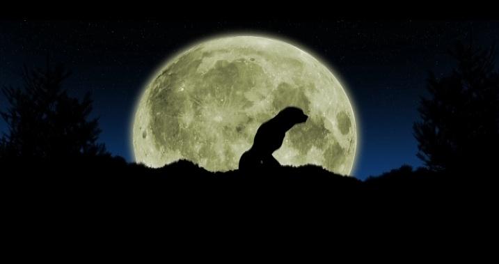 werewolfthumb